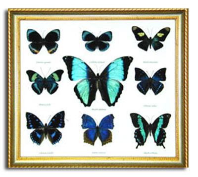 9 Bluish Butterflies Wall Hanging Frame