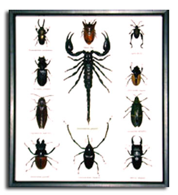 Quality Insect Bugs in a Black Frame