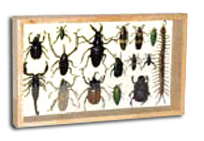 framed insects with claws and fangs