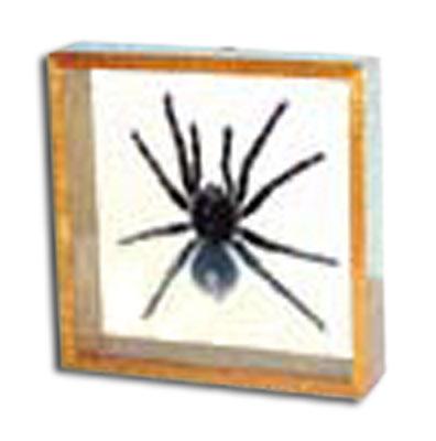 tarantula double glass frame - Double Glass Picture Frame