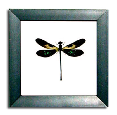 Dragonfly-Damselfly Insect in a Frame